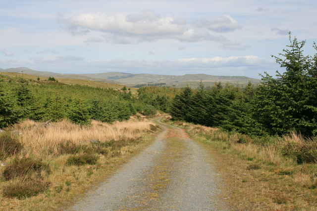 Forest path near Graigddu-isaf