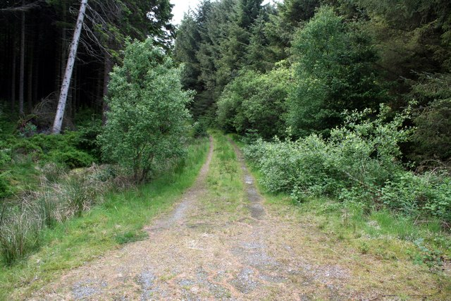 Forest track at Graigddu-isaf