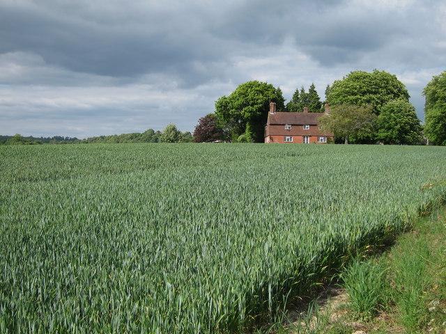 Crop field off Hawkhurst Lane