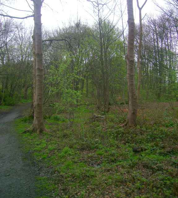 Woodland on Cairn Hill