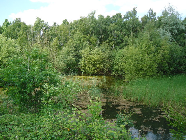 Disused Pit, nr Blue Mill Lane, Woodham Walter