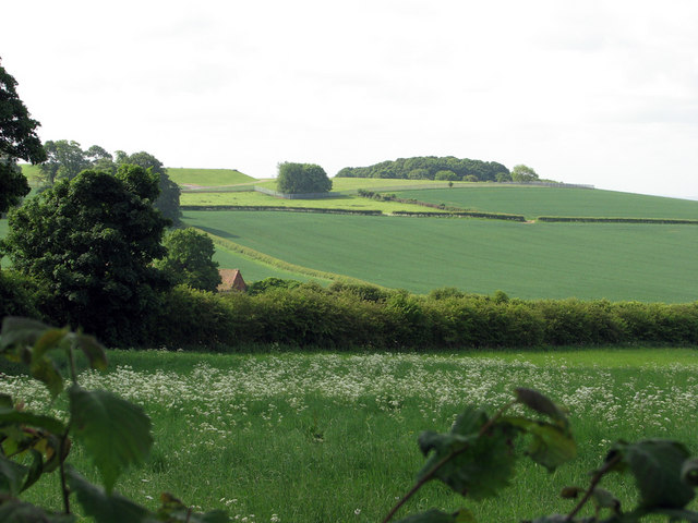 Catstone Hill and Shaw's Plantation