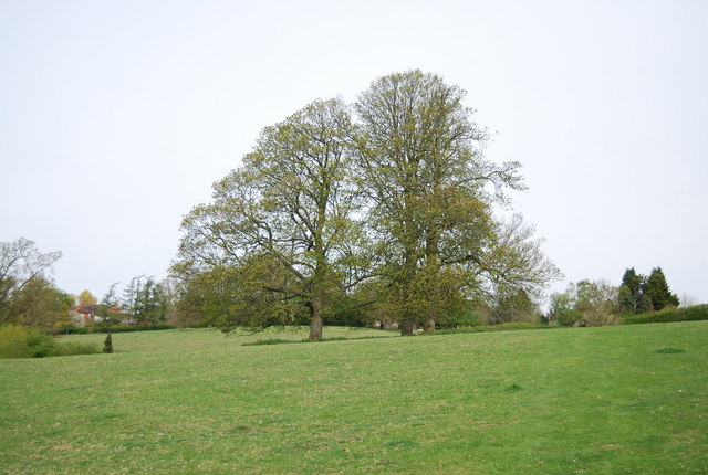 Trees by the High Weald Landscape Trail