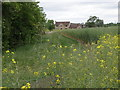 TL3579 : Towards North Fen Farm by Michael Trolove