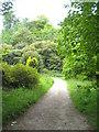 SW9641 : A footpath on the Caerhays Estate by Rod Allday