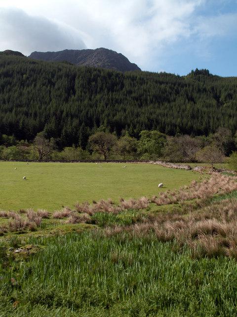 Field in Gleann Beag