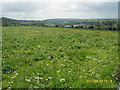 SK2169 : Spring meadow NW of Bakewell by marplerambler