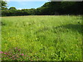 SX3672 : Hay meadow at Downgate by Rod Allday