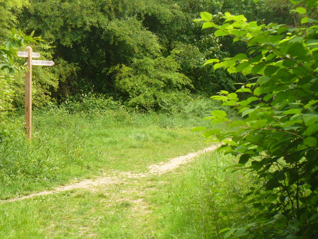 Bridleways on Ranmore Common