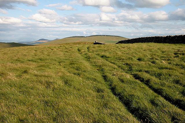 A grass track on Knowes Hill