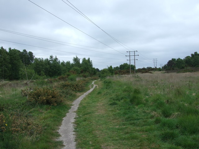 Footpath On Ferndown Common, Ferndown