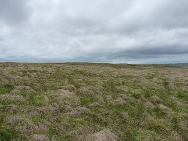 Extensive tussock grass on Bryn Trapau