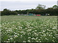 TL2676 : Grass meadow and sewage farm by Michael Trolove