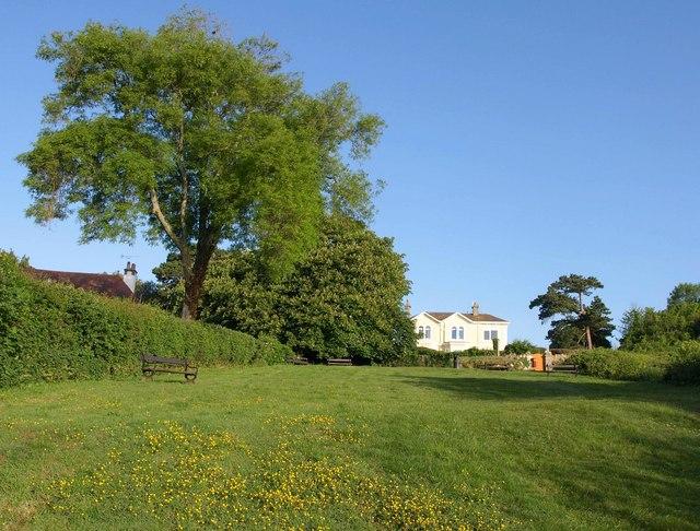 Grassy area, Petitor