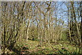 TQ3764 : Spring Park Wood by Nigel Chadwick