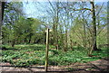 TQ3764 : LOOP in Spring Park Wood by Nigel Chadwick