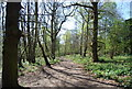 TQ3764 : LOOP, Spring Park Wood by Nigel Chadwick
