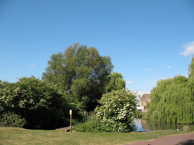 Pond in Folkestone Gardens