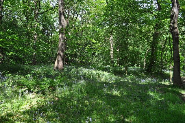 Ecclesall Wood