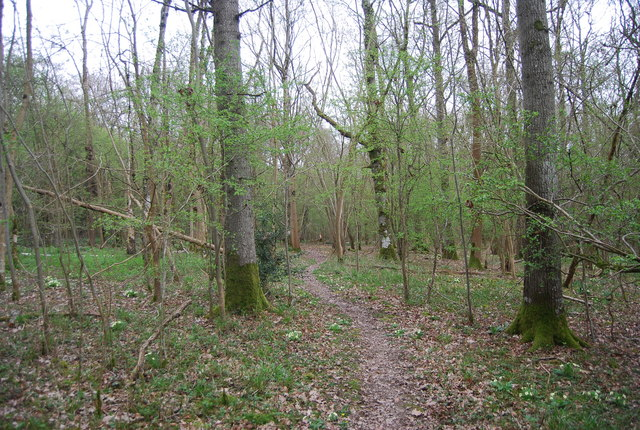 Footpath through Tittlesford Copse