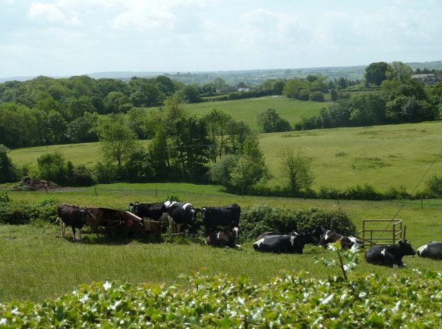 Cattle and meadow land towards Cowley