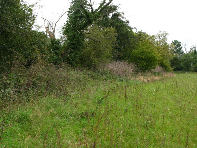 Field and woodland south of Tongs Farm (3)
