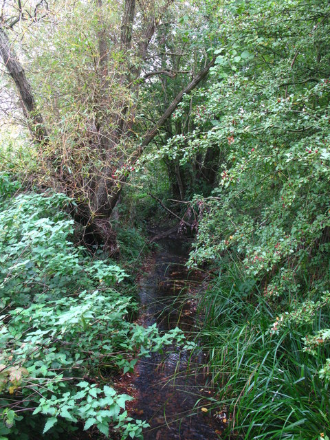 The Kyd Brook west of Petts Wood (2)