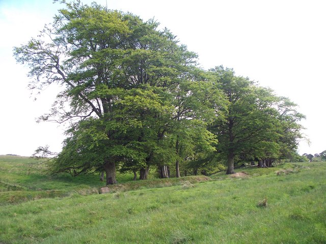 Trees along the stream edge