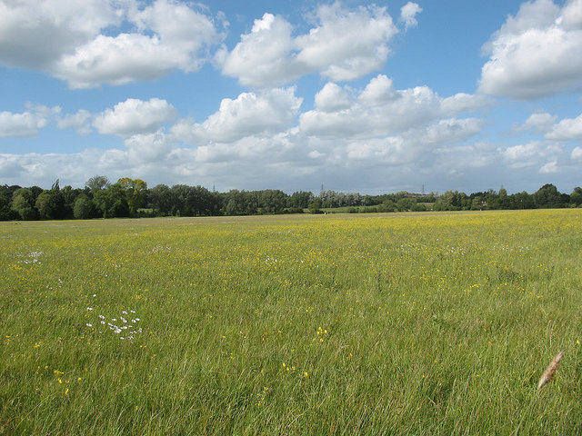 Hunsdon Mead nature reserve