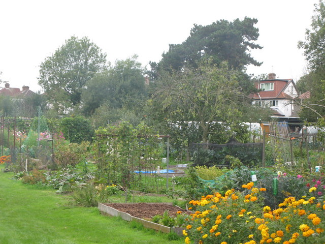 Eynsford Close Allotments (2)