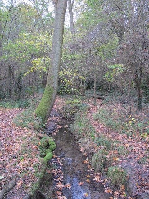 The Kyd Brook - Main Branch, west of Petts Wood Recreation Ground (2)