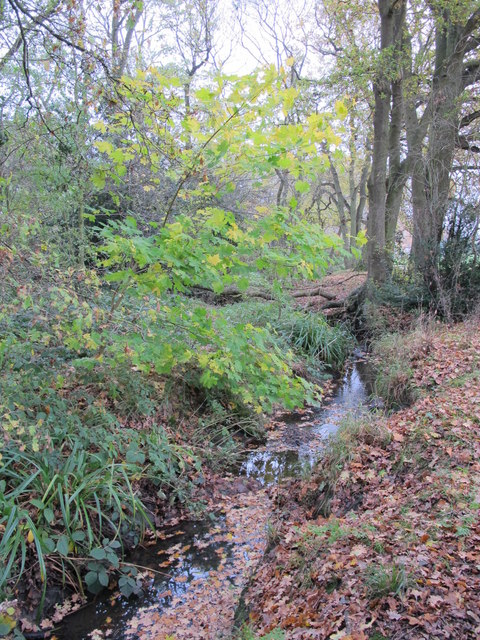 The Kyd Brook - Main Branch, west of Petts Wood Recreation Ground (3)