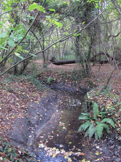 The Kyd Brook - Main Branch, in Roundabout Wood (4)