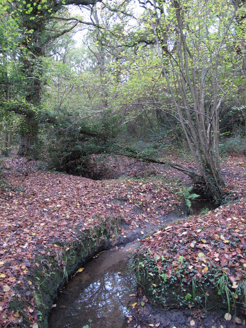 The Kyd Brook - Main Branch, in Roundabout Wood (6)