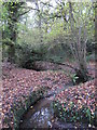 TQ4466 : The Kyd Brook - Main Branch, in Roundabout Wood (6) by Mike Quinn