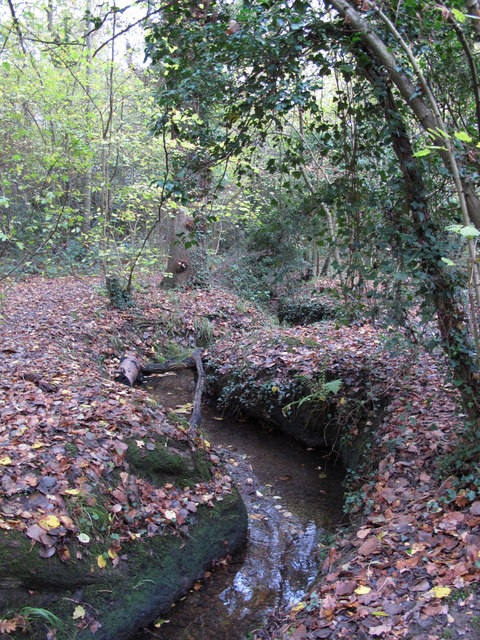 The Kyd Brook - Main Branch, in Roundabout Wood (8)