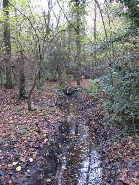 The Kyd Brook - Main Branch, in Roundabout Wood (9)