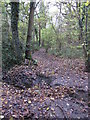 TQ4466 : Footpath crossing the Kyd Brook - Main Branch, in Roundabout Wood by Mike Quinn