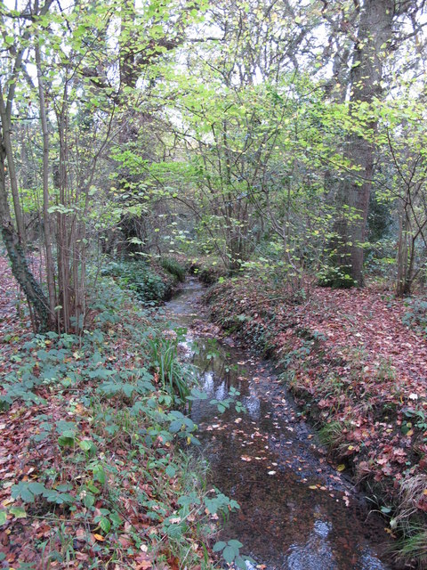 The Kyd Brook - Main Branch, in Sparrow Wood (2)