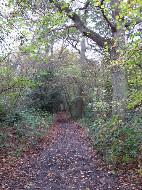 Footpath in Sparrow Wood