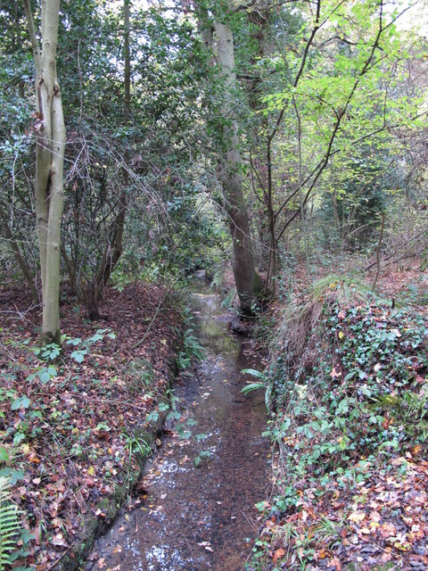 The Kyd Brook - Main Branch, in Sparrow Wood (3)