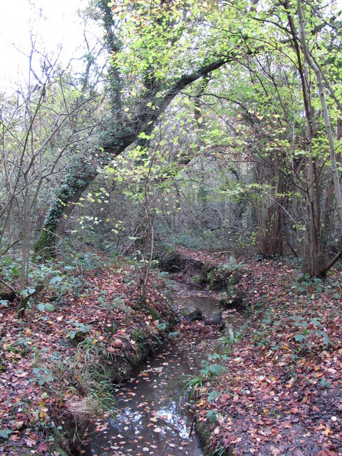 The Kyd Brook - Main Branch, in Sparrow Wood (4)