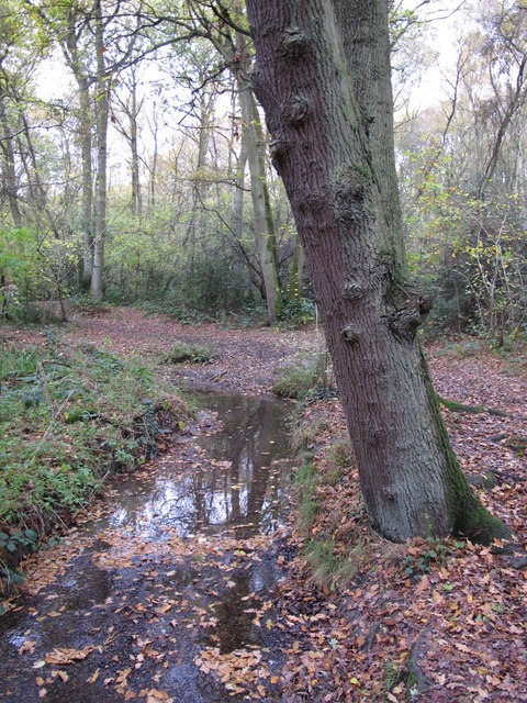 The Kyd Brook - Main Branch, in Sparrow Wood (5)