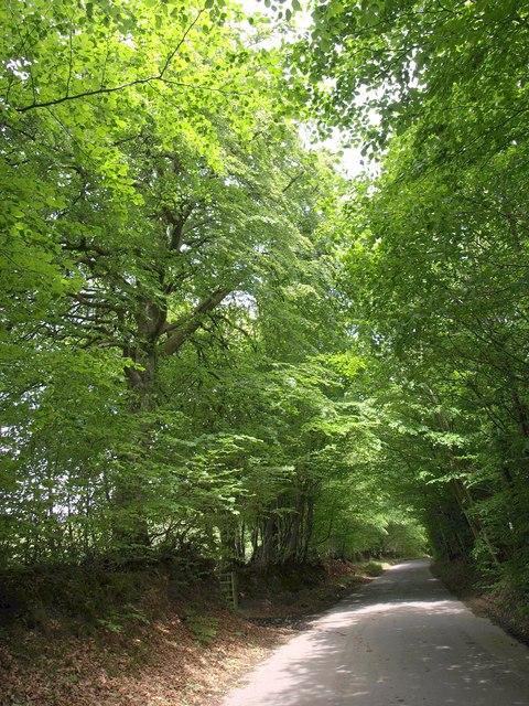 Road past Nine Acre Plantation
