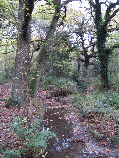 The Kyd Brook - Main Branch, in Sparrow Wood (6)