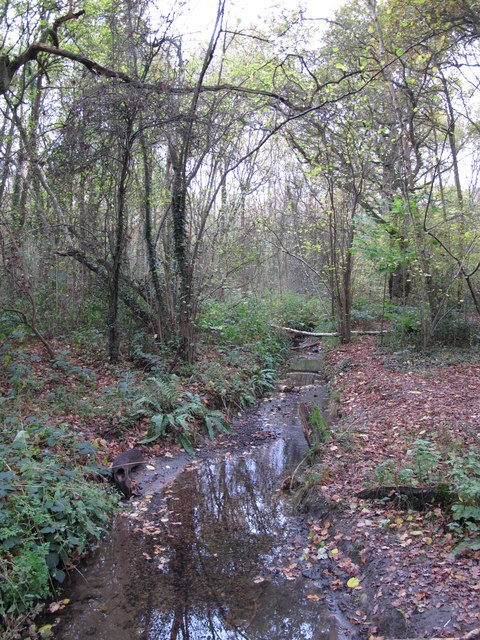 The Kyd Brook - Main Branch, in Sparrow Wood (7)