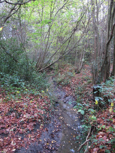 The Kyd Brook - Main Branch, in Sparrow Wood (8)
