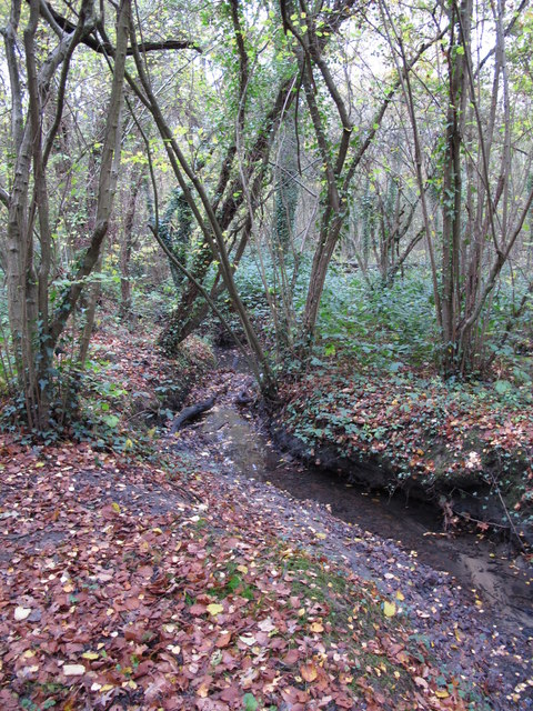The Kyd Brook - Main Branch, in Sparrow Wood (9)