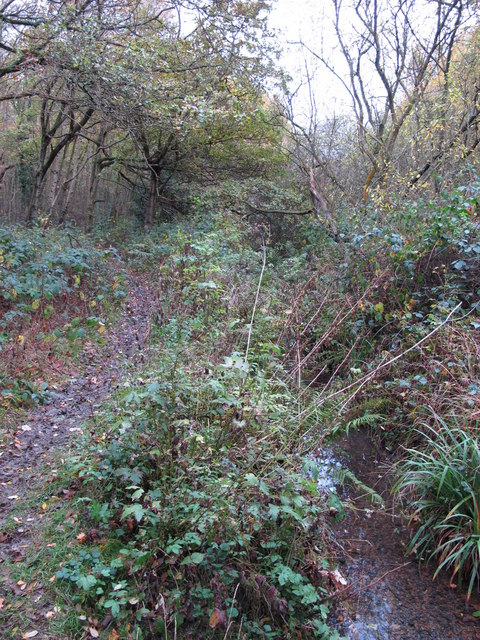 The Kyd Brook - Main Branch, in Sparrow Wood (10)