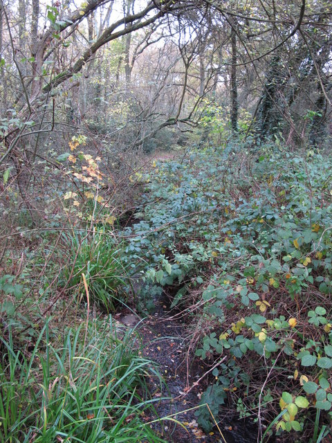 The Kyd Brook - Main Branch, in Sparrow Wood (11)